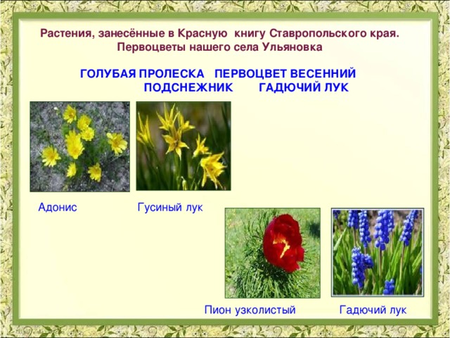 Доклад растения красной книги ставропольского края 9956