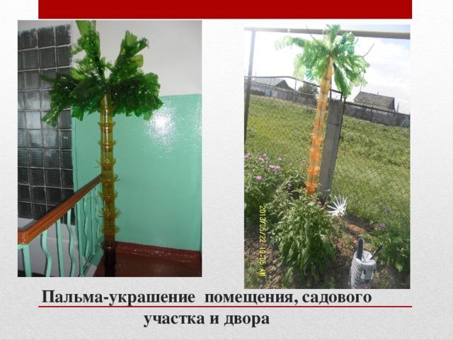 Пальма-украшение помещения, садового участка и двора