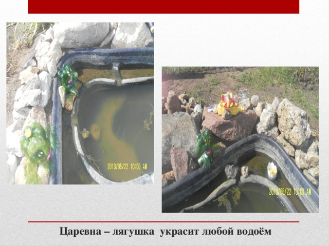 Царевна – лягушка украсит любой водоём