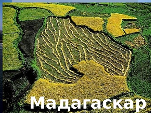 Танзания Алжир Египет Кения Мадагаскар Марокко