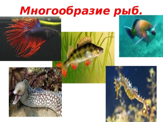 Многообразие рыб.