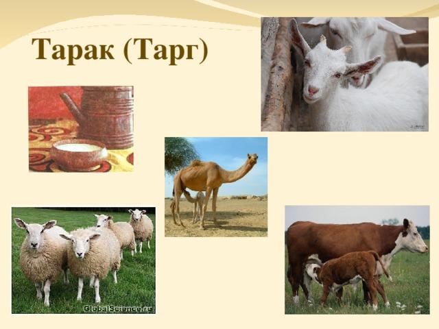 Тарак (Тарг)
