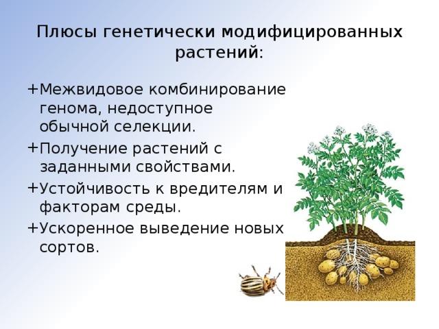 Плюсы генетически модифицированных растений: