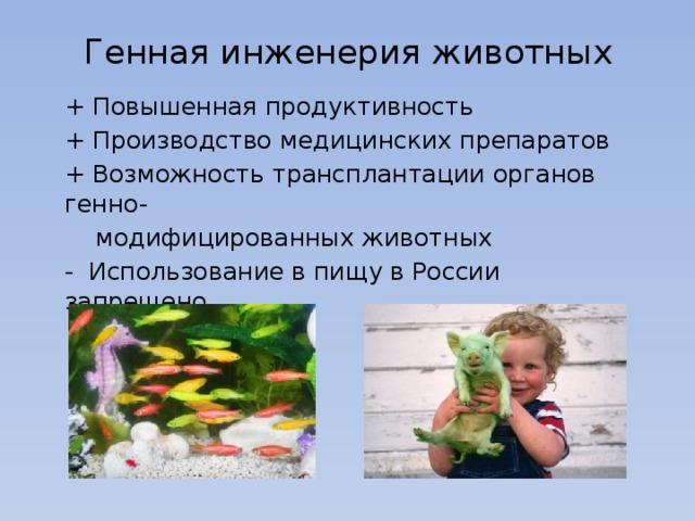 Генная инженерия животных + Повышенная продуктивность + Производство медицинских препаратов + Возможность трансплантации органов генно-  модифицированных животных - Использование в пищу в России запрещено