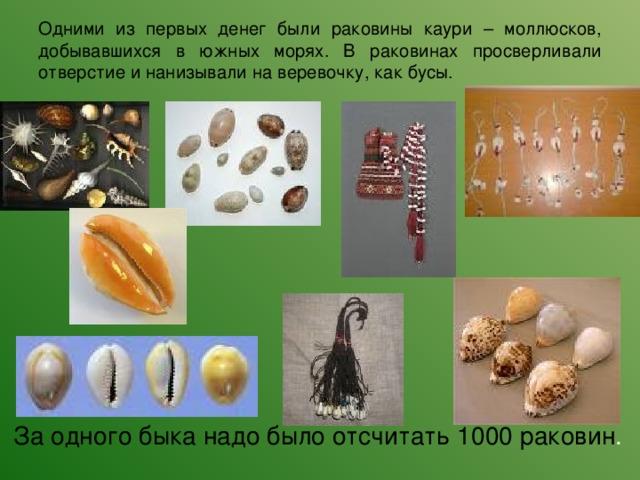 Одними из первых денег были раковины каури – моллюсков, добывавшихся в южных морях. В раковинах просверливали отверстие и нанизывали на веревочку, как бусы.  За одного быка надо было отсчитать 1000 раковин .