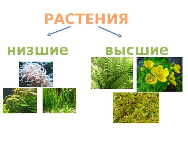 картинки низшие и высшие растения