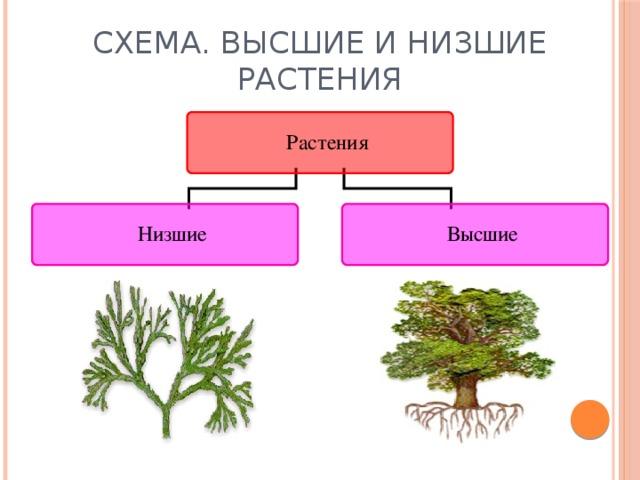 Многообразие растений доклад по биологии 7408