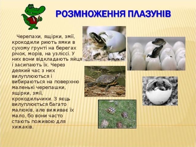 Поступово в пуголовків виростають ноги, відпадають хвости. Вони перетворюються на маленьких жабок, які дихають киснем у повітрі. Жабенята швидко ростуть і стають дорослими жабами.