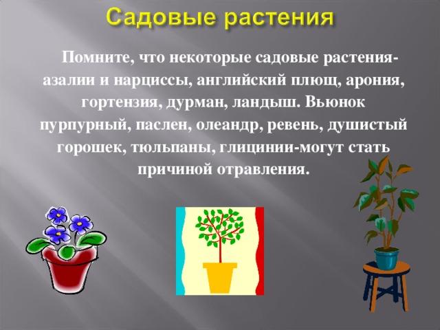 Помните, что некоторые садовые растения-азалии и нарциссы, английский плющ, арония, гортензия, дурман, ландыш. Вьюнок пурпурный, паслен, олеандр, ревень, душистый горошек, тюльпаны, глицинии-могут стать причиной отравления.