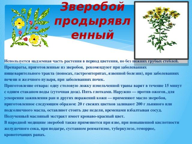Зверобой продырявленный Используется надземная часть растения в период цветения, но без нижних грубых стеблей. Препараты, приготовленные из зверобоя, рекомендуют при заболеваниях пищеварительного тракта (поносах, гастроэнтеритах, язвенной болезни), при заболеваниях печени и желчного пузыря, при заболеваниях почек. Приготовление отвара: одну столовую ложку измельченной травы варят в течение 15 минут с одним стаканом воды (суточная доза). Пить глотками. Наружно — против ожогов, для ускорения заживления ран и других поражений кожи — применяют масло зверобоя, приготовленное следующим образом: 20 г свежих цветков заливают 200 г льняного или подсолнечного масла, оставляют стоять две недели, временами взбалтывая сосуд. Полученный масляный экстракт имеет кроваво-красный цвет. В народной медицине зверобой также применяется при язве, при повышенной кислотности желудочного сока, при подагре, суставном ревматизме, туберкулезе, геморрое, кровоточащих ранах.