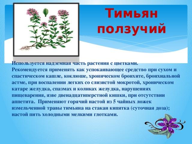 Тимьян ползучий Используется надземная часть растения с цветками. Рекомендуется применять как успокаивающее средство при сухом и спастическом кашле, коклюше, хроническом бронхите, бронхиальной астме, при воспалении легких со слизистой мокротой, хроническом катаре желудка, спазмах и коликах желудка, нарушениях пищеварения, язве двенадцатиперстной кишки, при отсутствии аппетита. Применяют горячий настой из 5 чайных ложек измельченной травы тимьяна на стакан кипятка (суточная доза); настой пить холодными мелкими глотками.