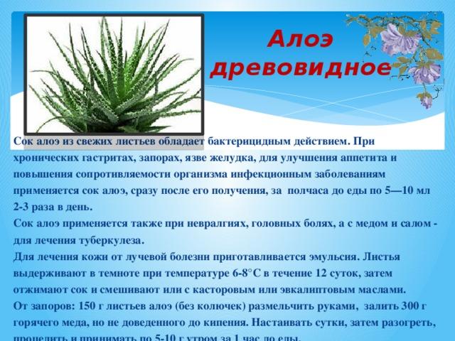 Алоэ древовидное Сок алоэ из свежих листьев обладает бактерицидным действием. При хронических гастритах, запорах, язве желудка, для улучшения аппетита и повышения сопротивляемости организма инфекционным заболеваниям применяется сок алоэ, сразу после его получения, за полчаса до еды по 5—10 мл 2-3 раза в день. Сок алоэ применяется также при невралгиях, головных болях, а с медом и салом - для лечения туберкулеза. Для лечения кожи от лучевой болезни приготавливается эмульсия. Листья выдерживают в темноте при температуре 6-8°С в течение 12 суток, затем отжимают сок и смешивают или с касторовым или эвкалиптовым маслами. От запоров: 150 г листьев алоэ (без колючек) размельчить руками, залить 300 г горячего меда, но не доведенного до кипения. Настаивать сутки, затем разогреть, процедить и принимать по 5-10 г утром за 1 час до еды.
