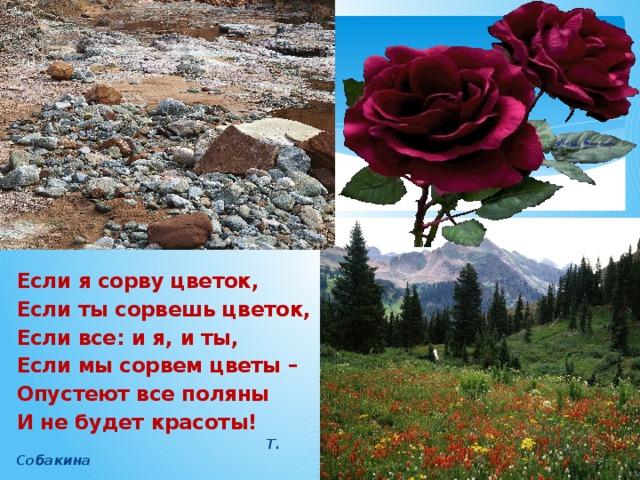 Если я сорву цветок, Если ты сорвешь цветок, Если все: и я, и ты, Если мы сорвем цветы – Опустеют все поляны И не будет красоты!  Т. Собакина