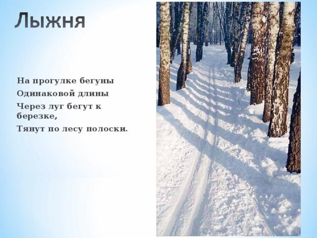 На прогулке бегуны Одинаковой длины Через луг бегут к березке, Тянут по лесу полоски.