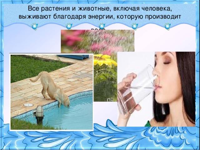 Все растения и животные, включая человека, выживают благодаря энергии, которую производит вода .