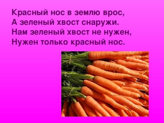 Красный нос в землю врос, А зеленый хвост снаружи. Нам зеленый хвост не нужен, Нужен только красный нос.