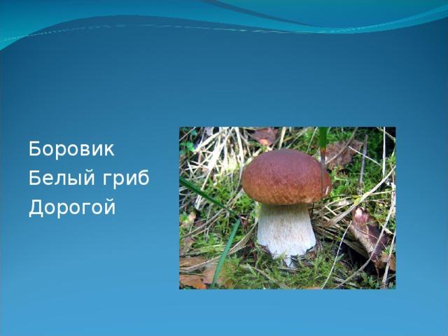 Боровик Белый гриб Дорогой