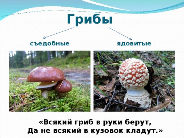 Грибы съедобные ядовитые «Всякий гриб в руки берут, Да не всякий в кузовок кладут.»