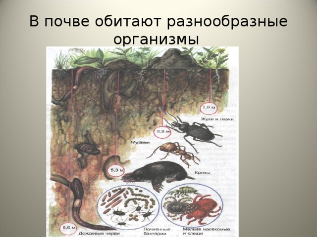 В почве обитают разнообразные организмы