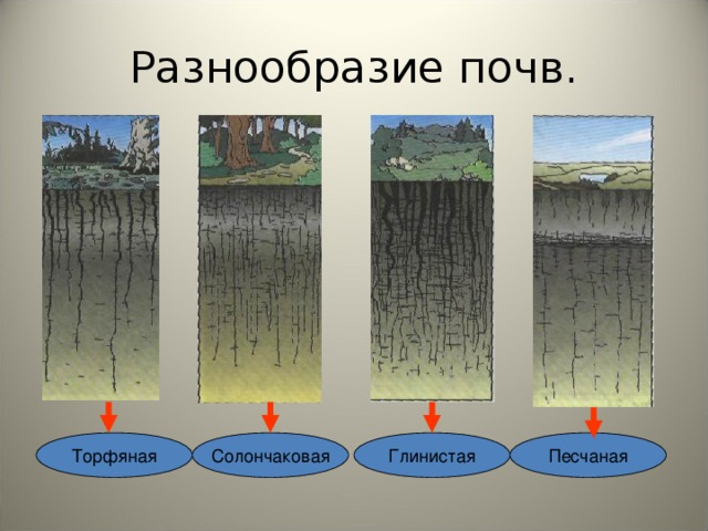 Разнообразие почв. Солончаковая Торфяная Песчаная Глинистая
