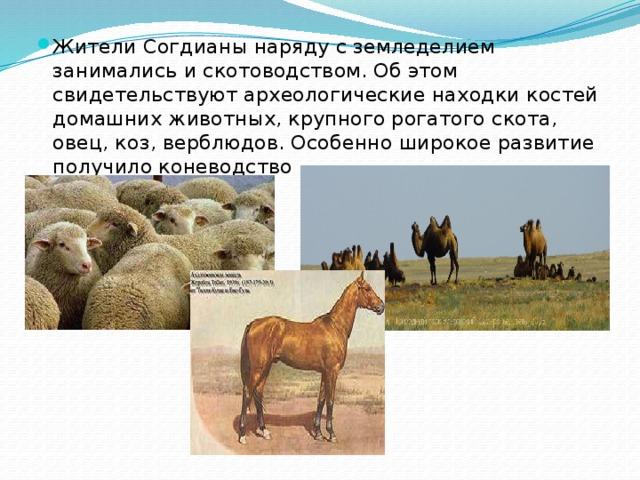 Жители Согдианы наряду с земледелием занимались и скотоводством. Об этом свидетельствуют археологические находки костей домашних животных, крупного рогатого скота, овец, коз, верблюдов. Особенно широкое развитие получило коневодство