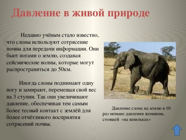 Давление в живой природе  Недавно учёным стало известно, что слоны используют сотрясение почвы для передачи информации. Они бьют ногами о землю, создавая сейсмические волны, которые могут распространяться до 50км.  Иногда слоны поднимают одну ногу и замирают, перемещая свой вес на 3 ступни. Так они увеличивают давление, обеспечивая тем самым более тесный контакт с землёй для более отчётливого восприятия сотрясений почвы. Давление слона на землю Давление слона на землю в 10 раз меньше давления женщины, стоящей «на шпильках»