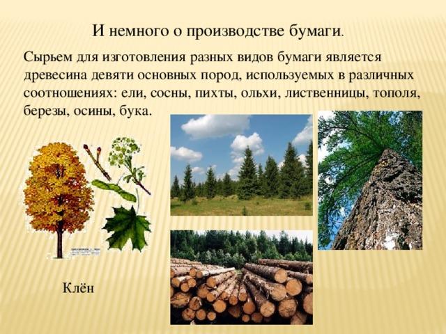 И немного о производстве бумаги . Сырьем для изготовления разных видов бумаги является древесина девяти основных пород, используемых в различных соотношениях: ели, сосны, пихты, ольхи, лиственницы, тополя, березы, осины, бука. Клён