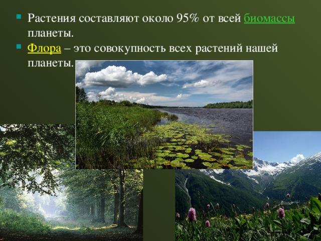 Растения составляют около 95% от всей биомассы планеты. Флора