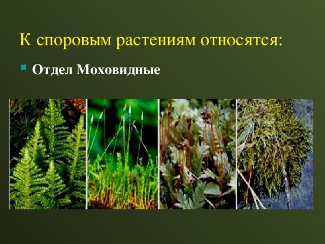 К споровым растениям относятся: