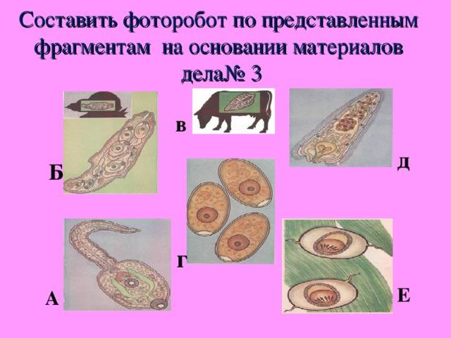 Составить фоторобот по представленным фрагментам на основании материалов дела№ 3 в д Б г Е А