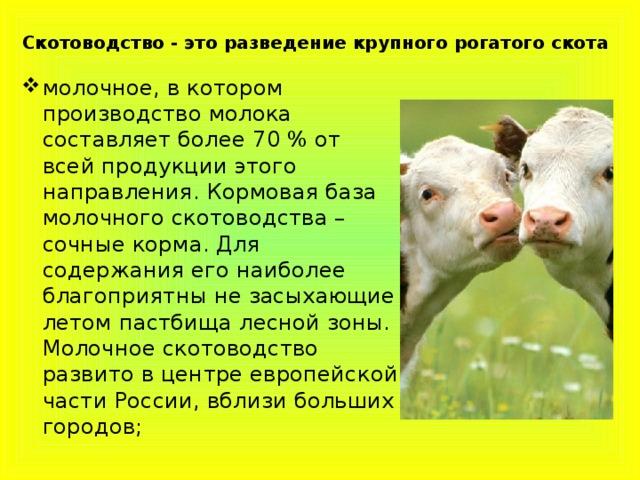 Скотоводство - это разведение крупного рогатого скота
