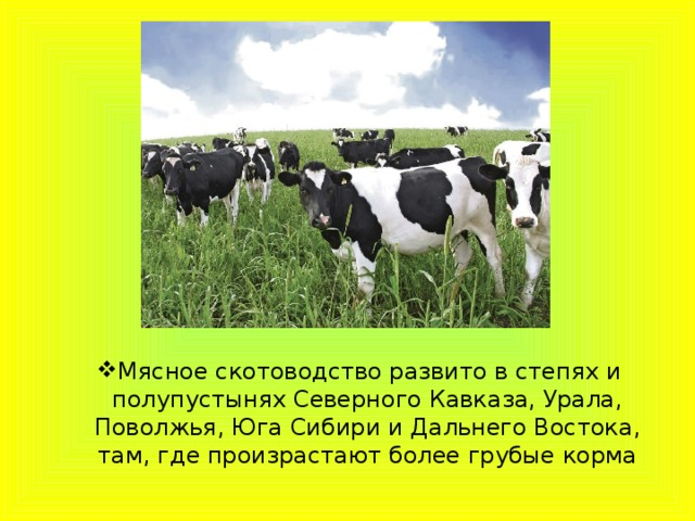 Мясное скотоводство развито в степях и полупустынях Северного Кавказа, Урала, Поволжья, Юга Сибири и Дальнего Востока, там, где произрастают более грубые корма Мясное скотоводство развито в степях и полупустынях Северного Кавказа, Урала, Поволжья, Юга Сибири и Дальнего Востока, там, где произрастают более грубые корма
