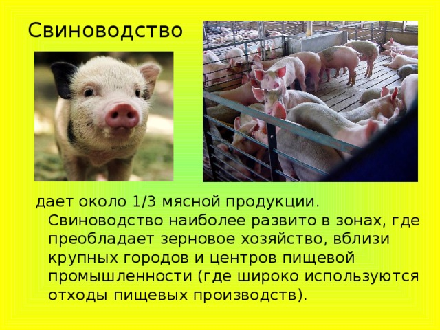 Свиноводство дает около 1/3 мясной продукции. Свиноводство наиболее развито в зонах, где преобладает зерновое хозяйство, вблизи крупных городов и центров пищевой промышленности (где широко используются отходы пищевых производств).