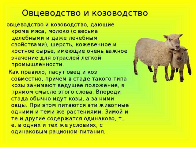 Овцеводство и козоводство овцеводство и козоводство, дающие кроме мяса, молоко (с весьма целебными и даже лечебным свойствами), шерсть, кожевенное и костное сырье, имеющие очень важное значение для отраслей легкой промышленности.  Как правило, пасут овец и коз совместно, причем в стаде такого типа козы занимают ведущее положение, в прямом смысле этого слова. Впереди стада обычно идут козы, а за ними овцы. При этом питаются эти животные одними и теми же растениями. Зимой и те и другие содержатся одинаково, т. е. в одних и тех же условиях, с одинаковым рационом питания.