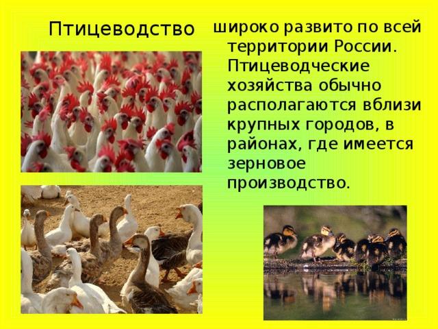 Птицеводство широко развито по всей территории России. Птицеводческие хозяйства обычно располагаются вблизи крупных городов, в районах, где имеется зерновое производство.