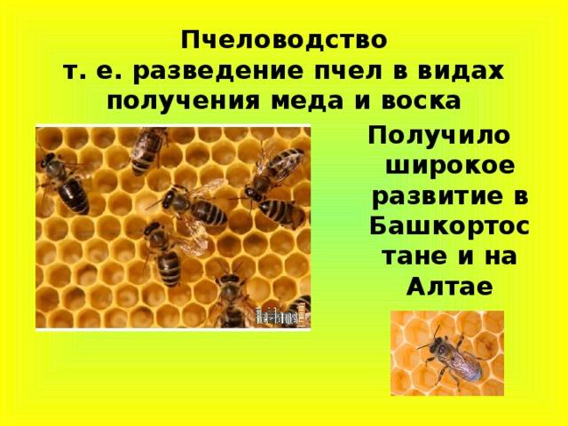 Пчеловодство  т. е. разведение пчел в видах получения меда и воска Получило широкое развитие в Башкортостане и на Алтае