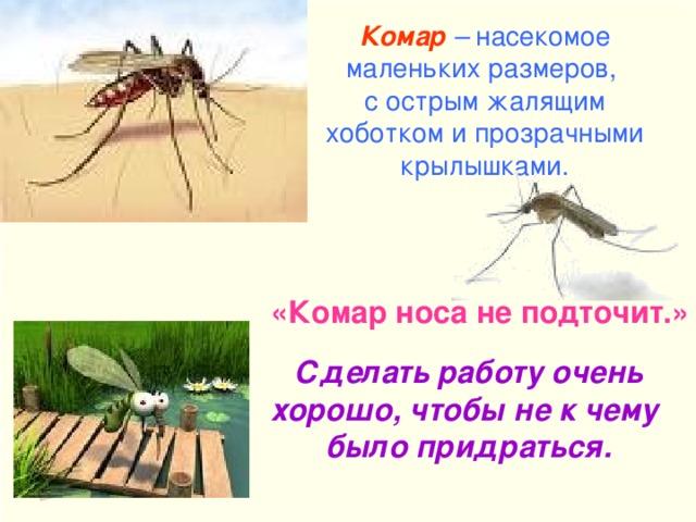 Комар  – насекомое маленьких размеров, с острым жалящим хоботком и прозрачными крылышками. «Комар носа не подточит.» Сделать работу очень хорошо, чтобы не к чему было придраться.