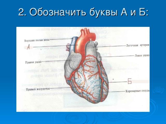 2. Обозначить буквы А и Б: