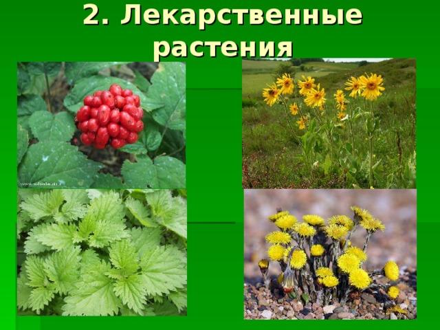 2. Лекарственные растения