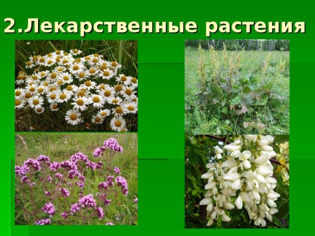 2.Лекарственные растения