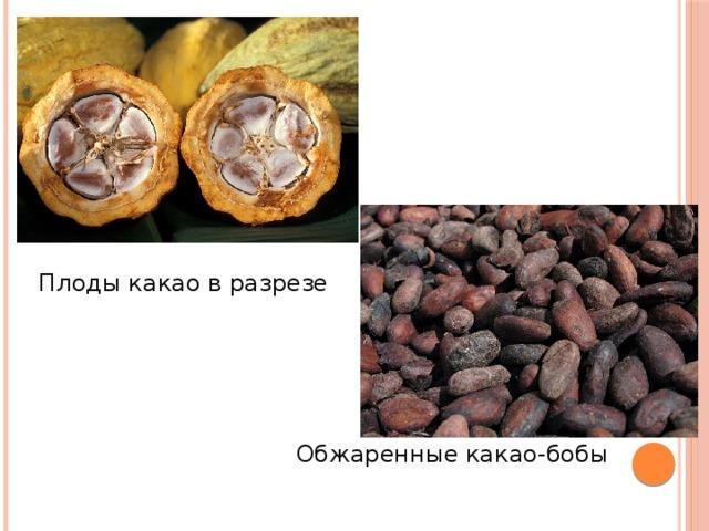 Плоды какао в разрезе  Обжаренные какао-бобы