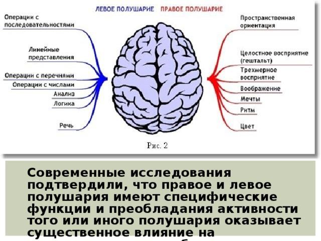 Современные исследования подтвердили, что правое и левое полушария имеют специфические функции и преобладания активности того или иного полушария оказывает существенное влияние на индивидуальные особенности личности человека.