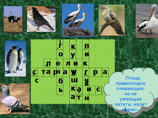 5.  1.   4.      2.       3.          6.    7.         го пи       б в ь  н        ку  у ш к а             п е л и к а н с т р а у с г р а ч  Птица, превосходно плавающая, но не умеющая летать; носит «фрак». Птица, складывающая свой улов в клюв.   Крылатый почтальон. Птица, прилетающая к нам с юга первая.  Птица, подбрасывающая свои яйца в гнёзда других птиц. Говорят, эта птица приносит в дом детей. Самая большая, хотя и нелетающая птица. а и с т