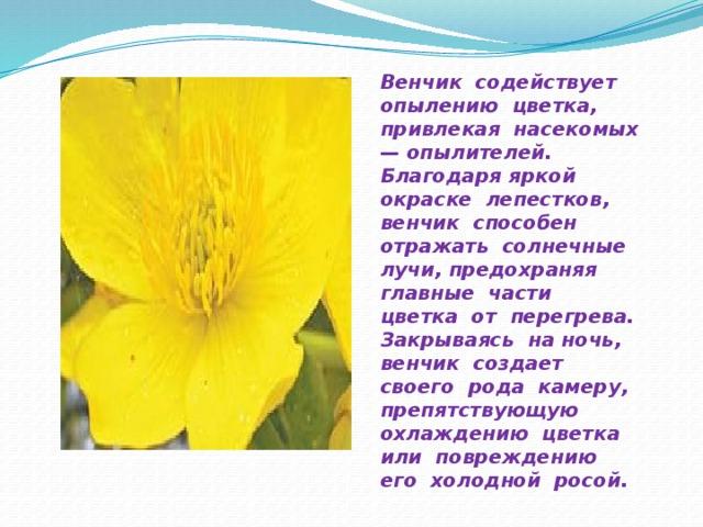 Венчик содействует опылению цветка, привлекая насекомых — опылителей. Благодаря яркой окраске лепестков, венчик способен отражать солнечные лучи, предохраняя главные части цветка от перегрева. Закрываясь на ночь, венчик создает своего рода камеру, препятствующую охлаждению цветка или повреждению его холодной росой.