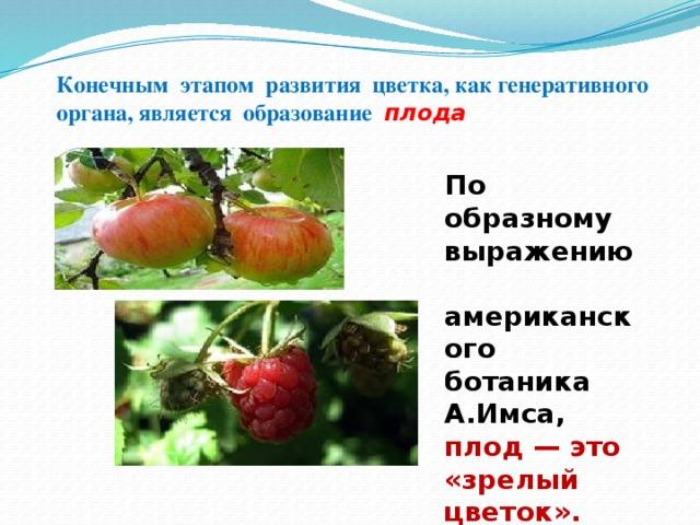 Конечным этапом развития цветка, как генеративного органа, является образование плода По образному выражению американского ботаника А.Имса, плод — это «зрелый цветок».