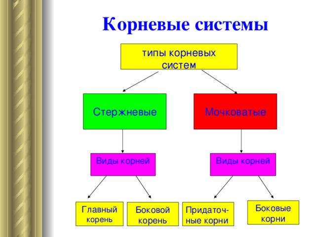 Рисунок: Корневые системы Стержневая корневая система Мочковатая корневая система