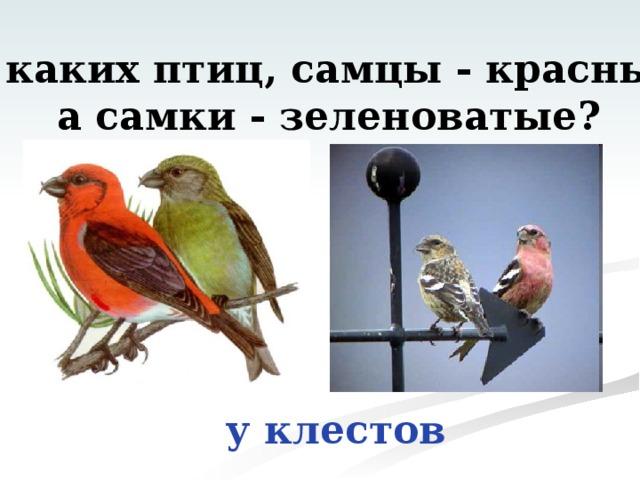 У каких птиц, самцы - красные,  а самки - зеленоватые? у клестов