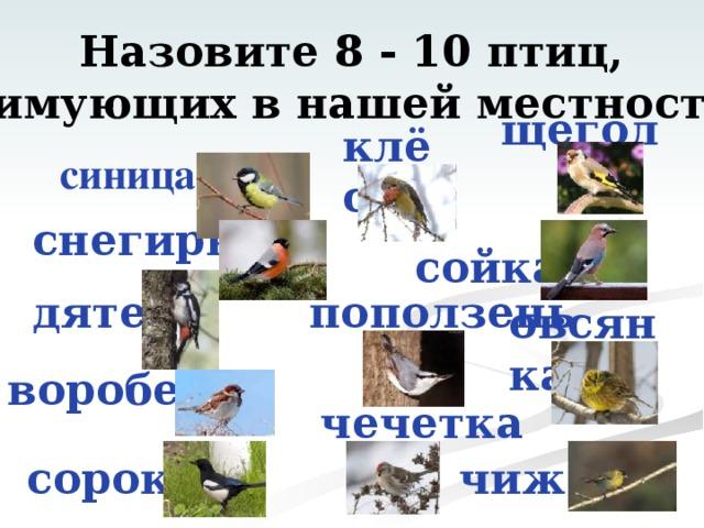 Назовите 8 - 10 птиц, зимующих в нашей местности  щегол клёст синица снегирь сойка  овсянка дятел поползень воробей чечетка чиж сорока