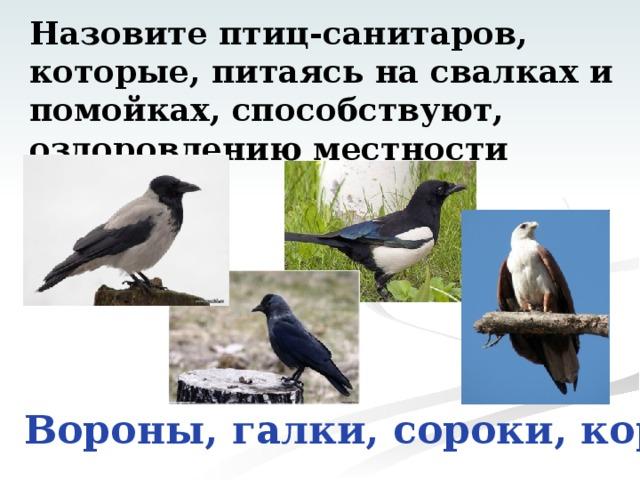 Назовите птиц-санитаров,  которые, питаясь на свалках и помойках, способствуют,  оздоровлению местности Вороны, галки, сороки, коршуны