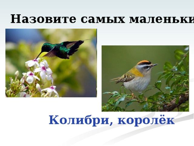 Назовите самых маленьких птиц Колибри, королёк